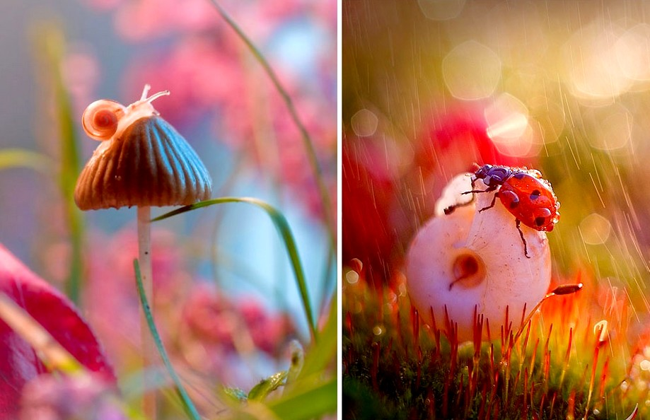 Mesekönyvbe illő képeket készít a természetről ez a fotós