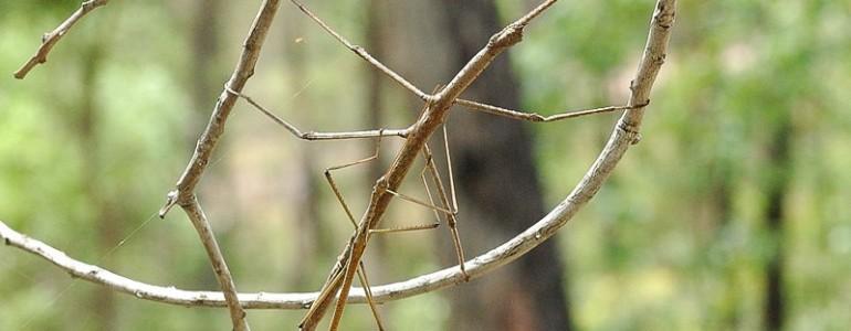 A világ leghosszabb rovarát találták meg Kínában