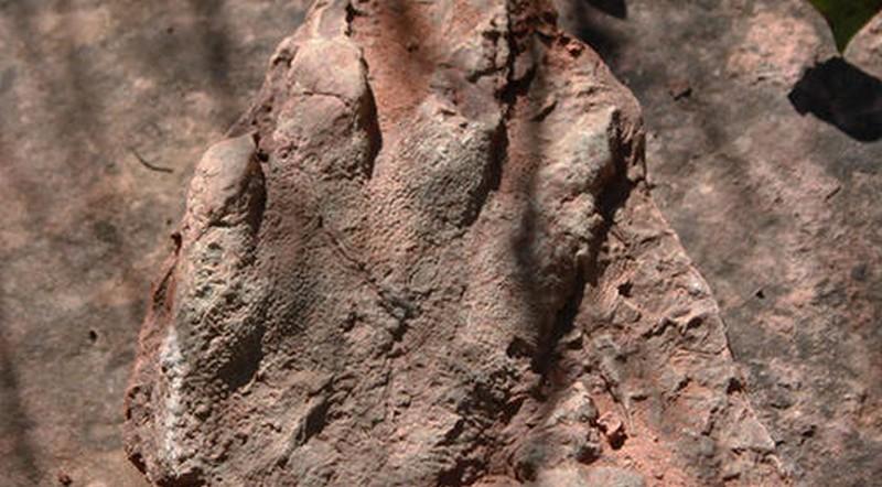 A dinoszauruszok ősének lábnyomát találhatták meg Katalóniában