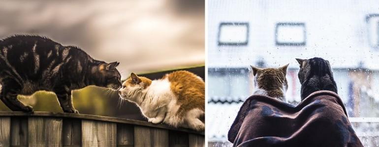 Különböző személyiségük ellenére is különleges kapocs van e két macska között