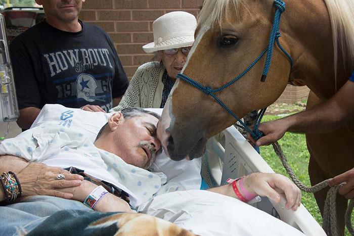 Így búcsúzott szeretett lovaitól a haldokló bácsi