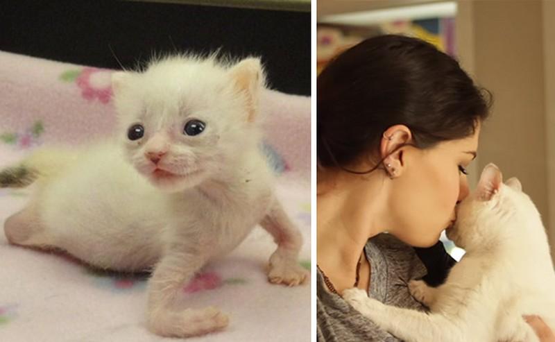 Rendellenessége miatt nem is élhetne, de mégis megtörtént a csoda ezzel a kiscicával
