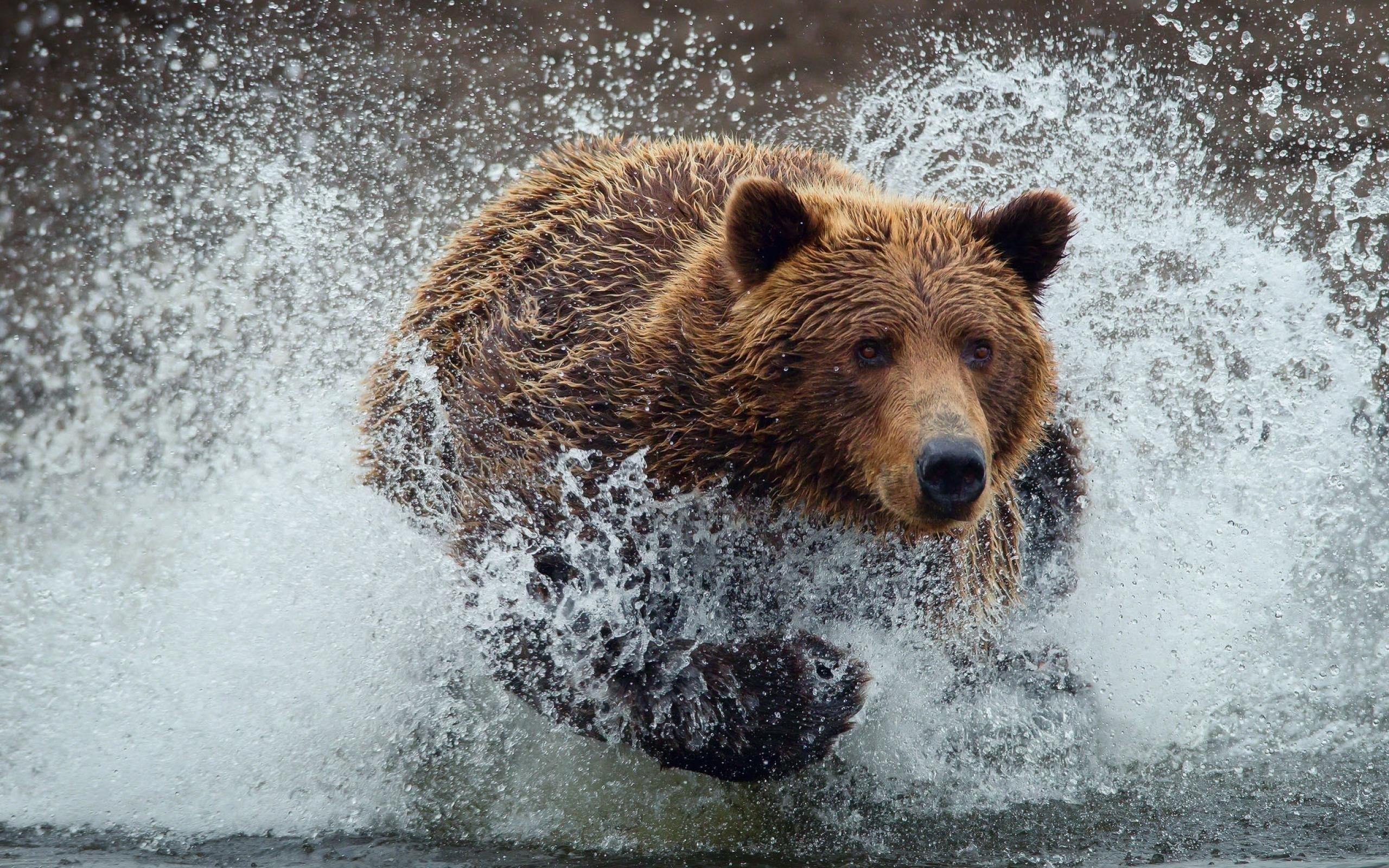 Jane Goodall a grizzlyk védettsége mellett kampányol