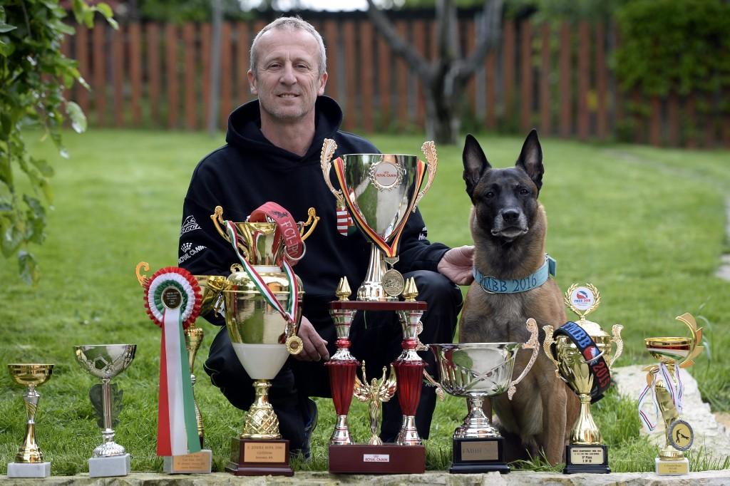 Budapest, 2016. május 17. Kivágó Arnold tulajdonos és kiképzõ malinois fajtájú belga juhászkutyájával és a díjakkal Mogyoródon 2016. május 17-én. A belga juhászkutyák világbajnokságának több évtizedes történetében még sosem nyert korábban magyar kutya, ez elõször az 5 éves Litónak sikerült, aki gazdájával együtt május 15-én hozta el a fõdíjat a franciaországi versenyrõl. MTI Fotó: Kovács Tamás
