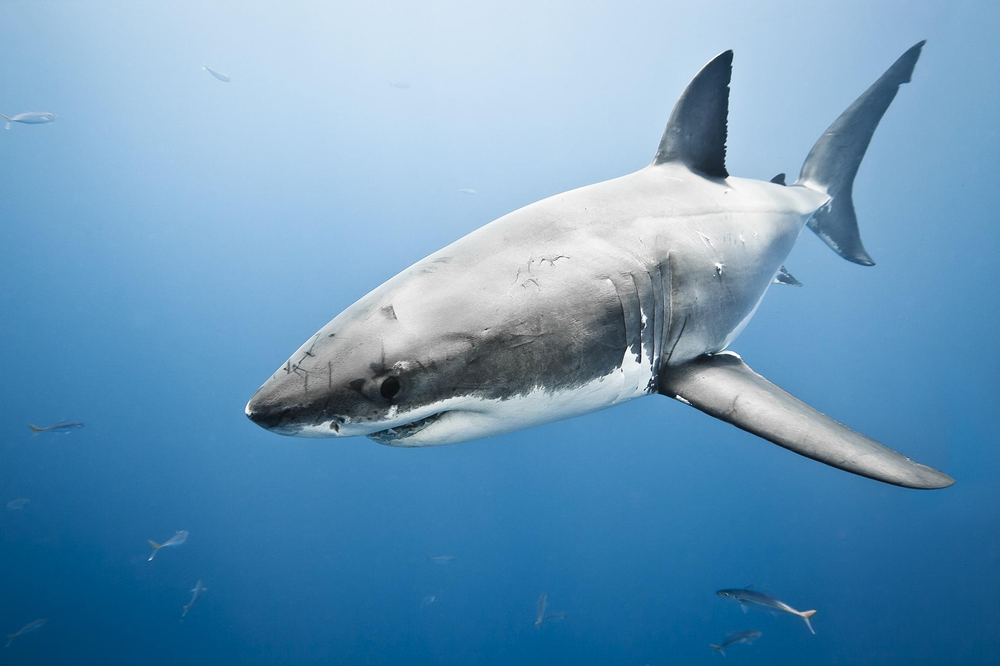 Cápa támadhatott meg egy nőt a kaliforniai partoknál