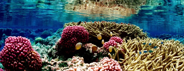 Drámai gyorsasággal pusztulnak a Dél-kínai-tenger korallzátonyai
