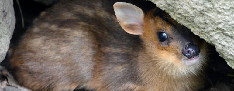 Cuki videó a Fővárosi Állatkert legifjabb lakóiról