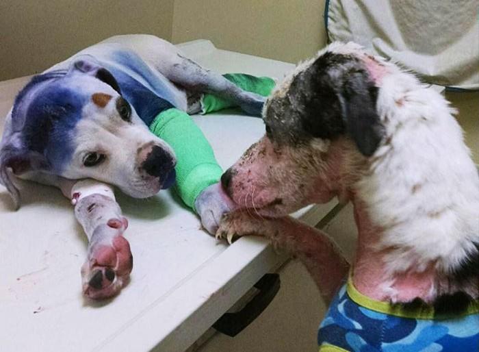 Pokoli dolgokon ment keresztül a két egymást vigasztaló kutyus