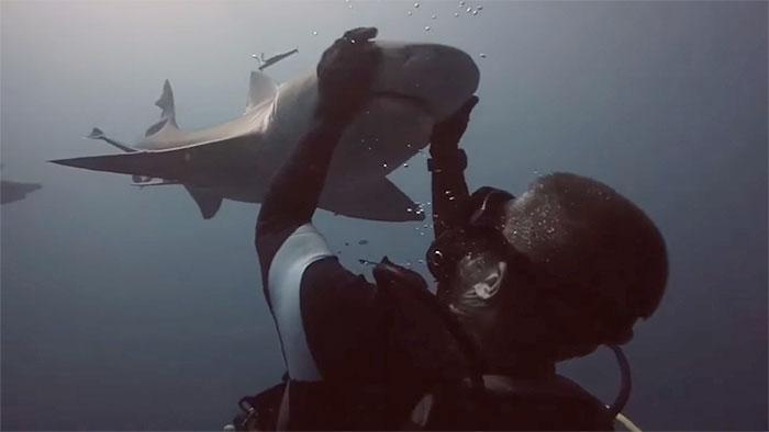 Bizonyíték, hogy a cápák is vágynak a kedvességre
