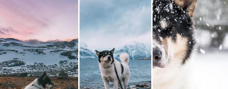Feladta munkáját a férfi, hogy kalandvágyának élhessen husky kutyusával