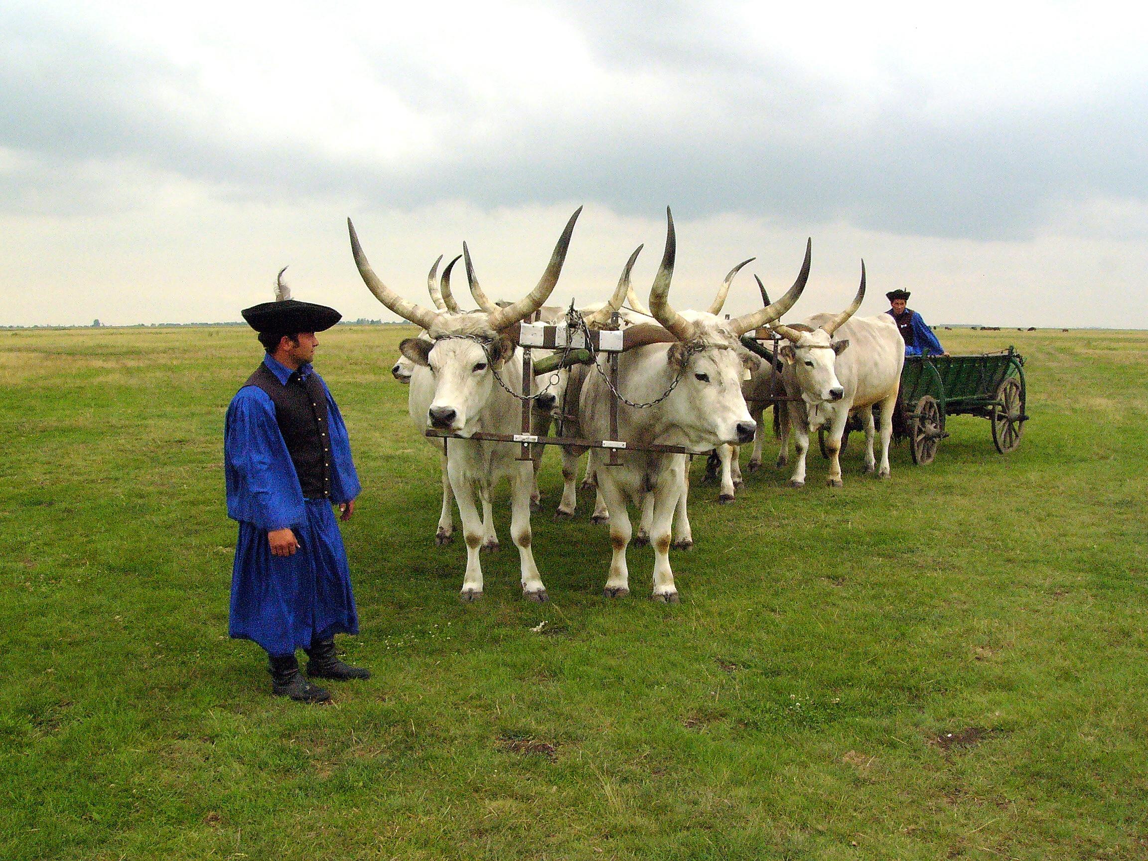 Debrecenben kezdődik a nemzeti parkok hete rendezvénysorozat