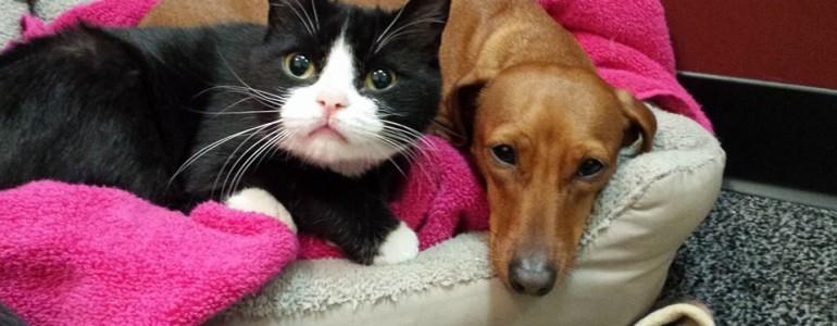 Kutyus lett a lebénult cica imádnivaló védelmezője