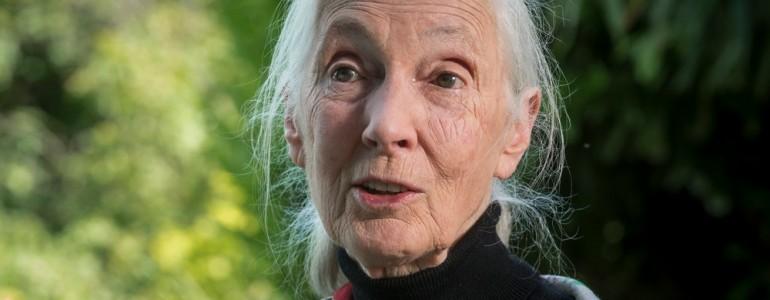 Jane Goodall: az emberiség képes a Föld megmentésére