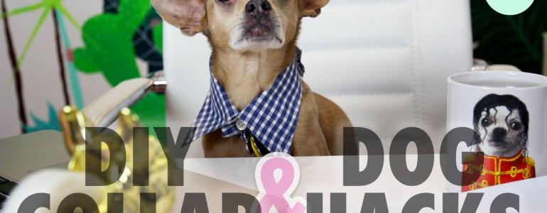 Így lesz egy régi ingből menő nyakörv kutyusod részére!