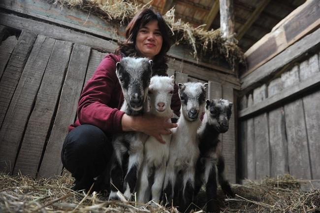 Négyes iker gidák születtek Mezőgyánban