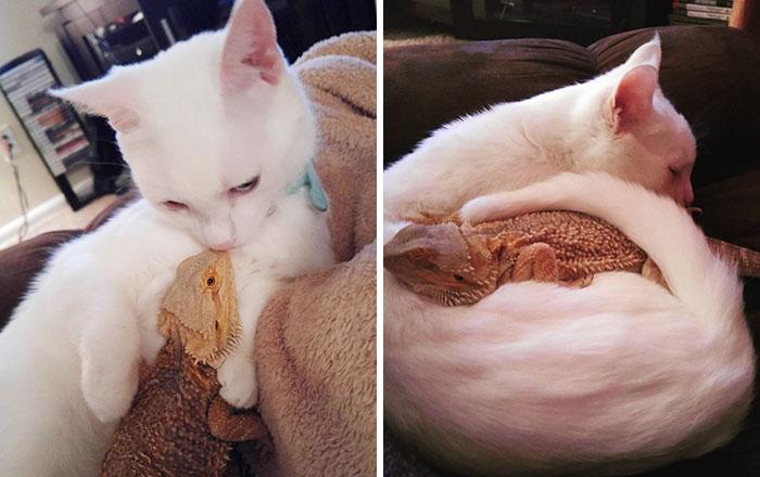 Életre szóló barátságot kötött a cica és a gyík