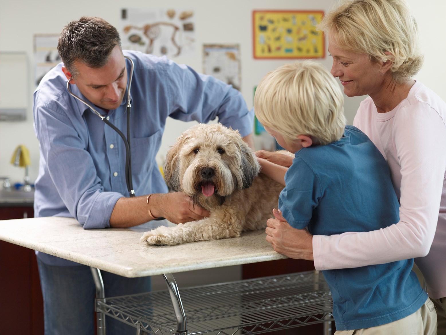 Halálos veszéllyel fenyegeti a kutyákat a szívférgesség