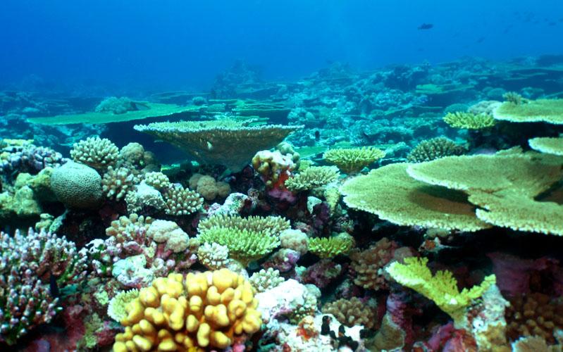 Korallfehéredés pusztít a Chagos-szigetek körüli tengeri rezervátumban