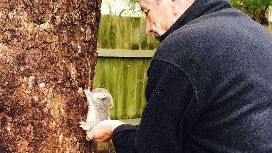 El fogsz olvadni ettől a pöttöm koalabébitől