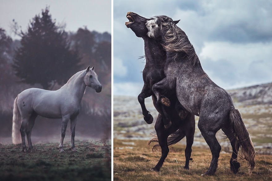 Lovak fotózásában talált rá a szabadságra ez a tehetséges fotós