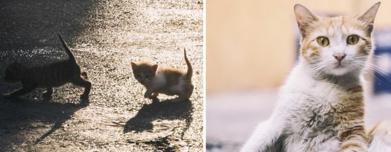 A kóbor macskák mindennapjait mutatja be ez a megindító fotósorozat