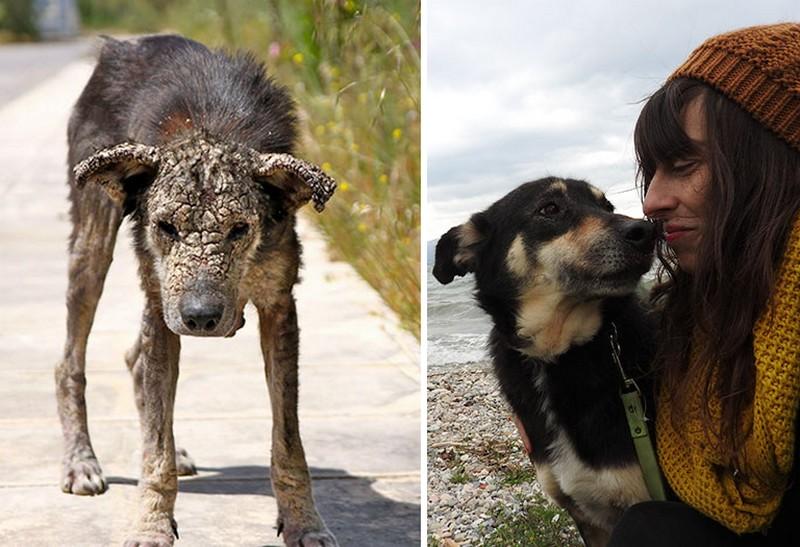 """Elképesztő átalakuláson ment át a """"kővé változott"""" kóbor kutya"""