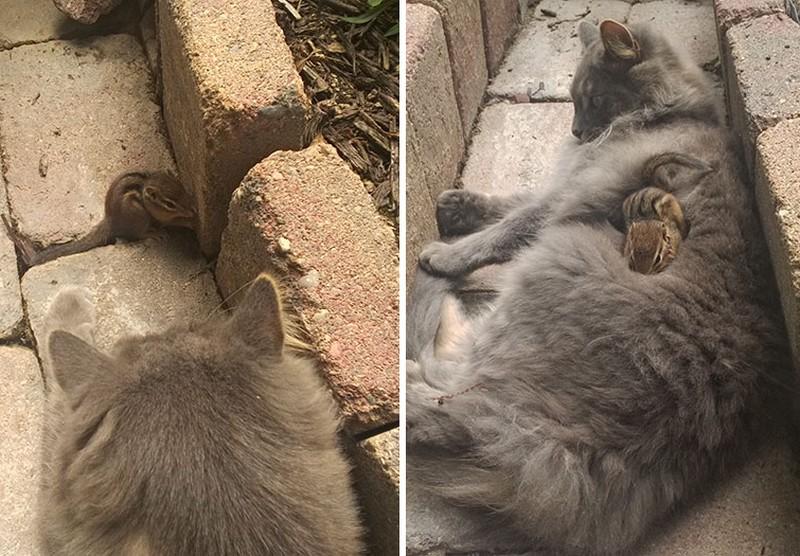 Mókussal barátkozott össze a bolyhos cica, a legcukibb alvótársak lettek