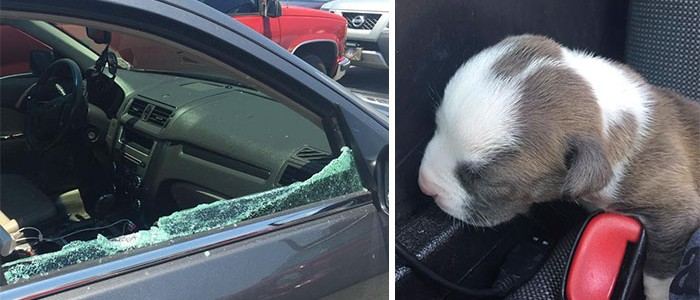 Kéthetes kutyakölyköt mentettek ki egy felforrósodott autóból