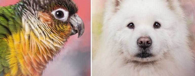 A szivárvány színei is megelevenednek ezeken a csodás állatos portrékon