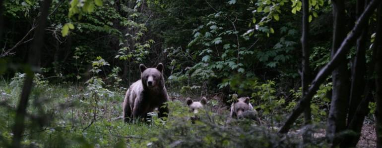 Medvebiztos szemeteskonténereket helyeznek ki Tusnádfürdőn