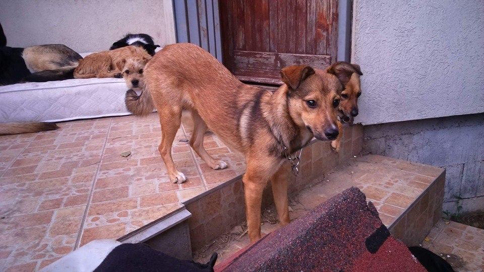 Elvira szomorú története meséli el, miért nem adnak többé albérletbe kutyát az állatmentők