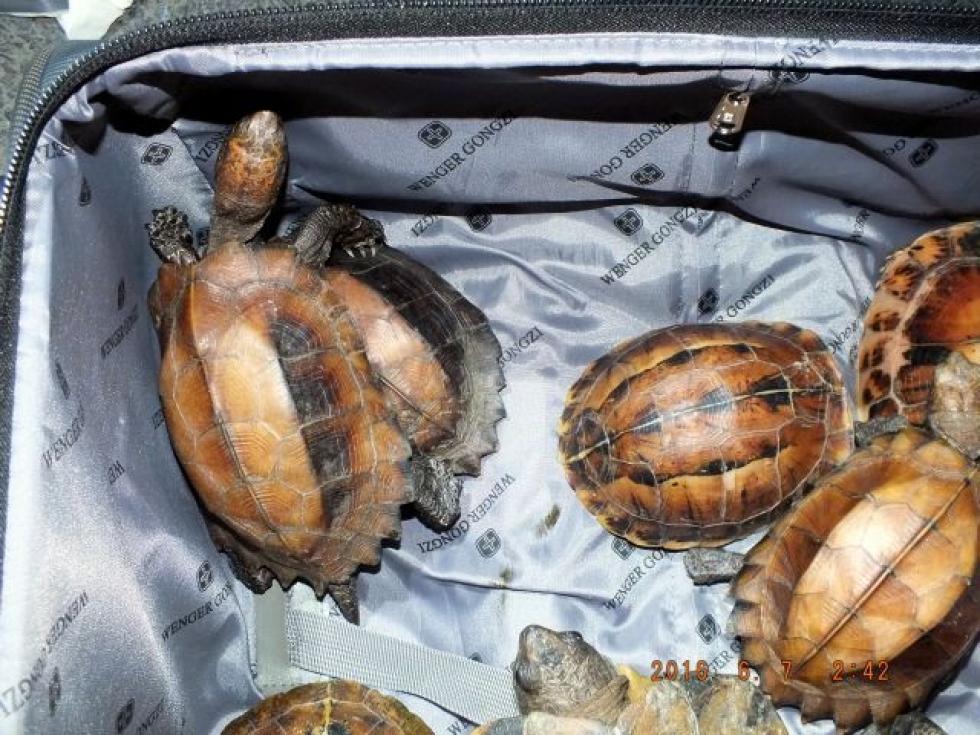 Cseh teknőscsempész bukott le az M1-esen