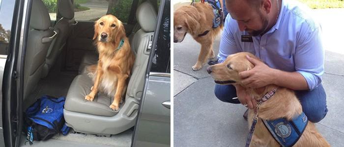 A kontinenst átrepülték, hogy az orlandói lövöldözés túlélőinek segítsenek ezek a kutyusok