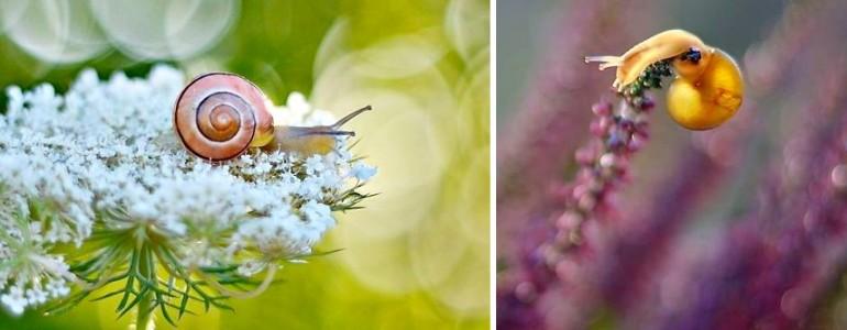 Apró csigák varázslatos világába kalauzol el ez a tehetséges fotós