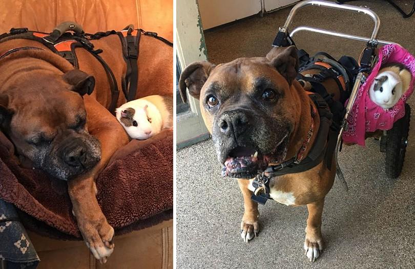 Tengerimalac lett a mozgássérült kutyus legjobb barátja