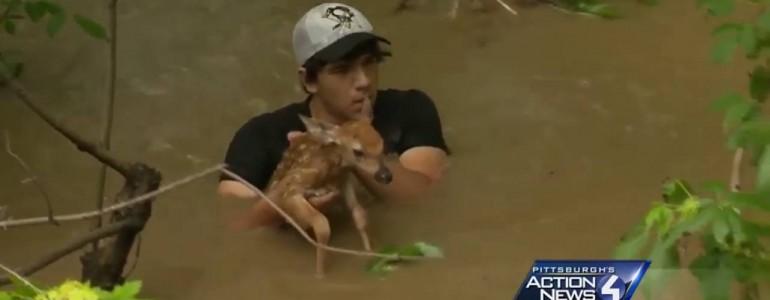 Életét kockáztatva mentette meg a riporter az áradásban elsodródott őzikét