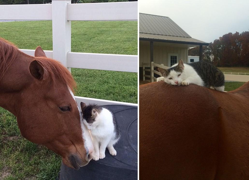 Különleges barátságot kötött a ló és a cica