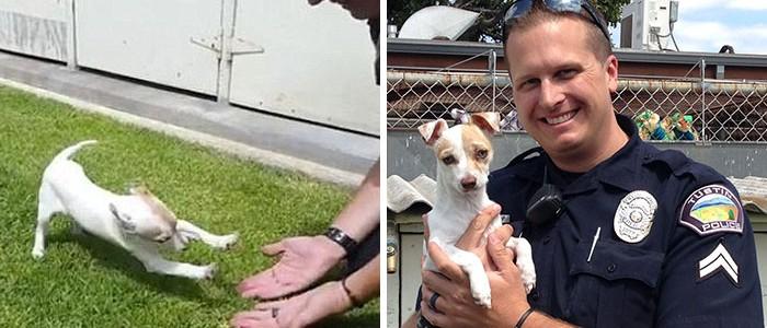 Így találkozott egy év után újra a rendőr, és a drogtanyáról megmentett kutyus