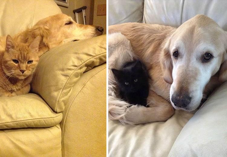Elvesztette legjobb barátját a kutyus, most egy fekete cica segíti a gyászban