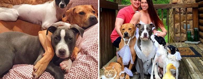 7 mentett állatot fogadott be ez a pár – Így telnek a mindennapjaik