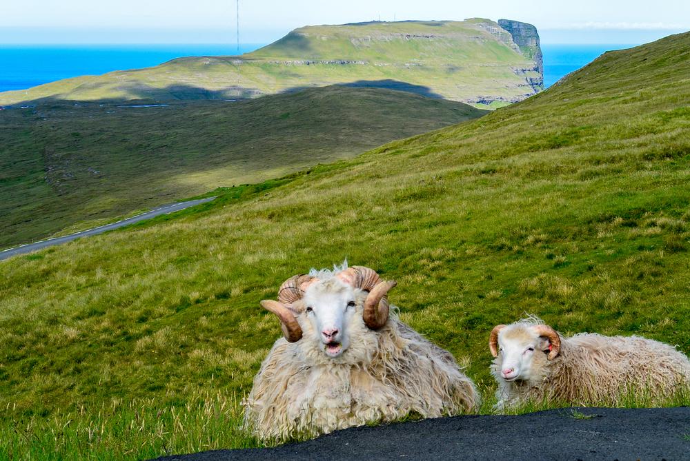 Birkák segítségével biztosítják a Google Street View szolgáltatást a Feröer-szigeteken