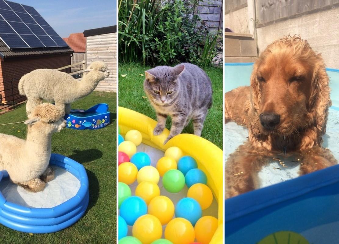14 állat, aki jobban élvezi a nyarat, mint bármelyikünk