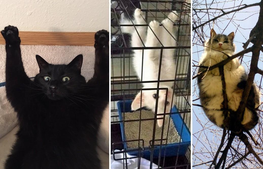 22 macska, akinek a rendszerében hiba lépett fel