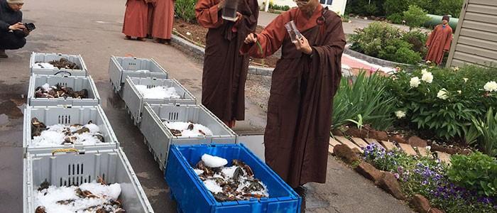 270 kg homárt vásároltak a buddhista szerzetesek, hogy szabadon engedjék őket az óceánban