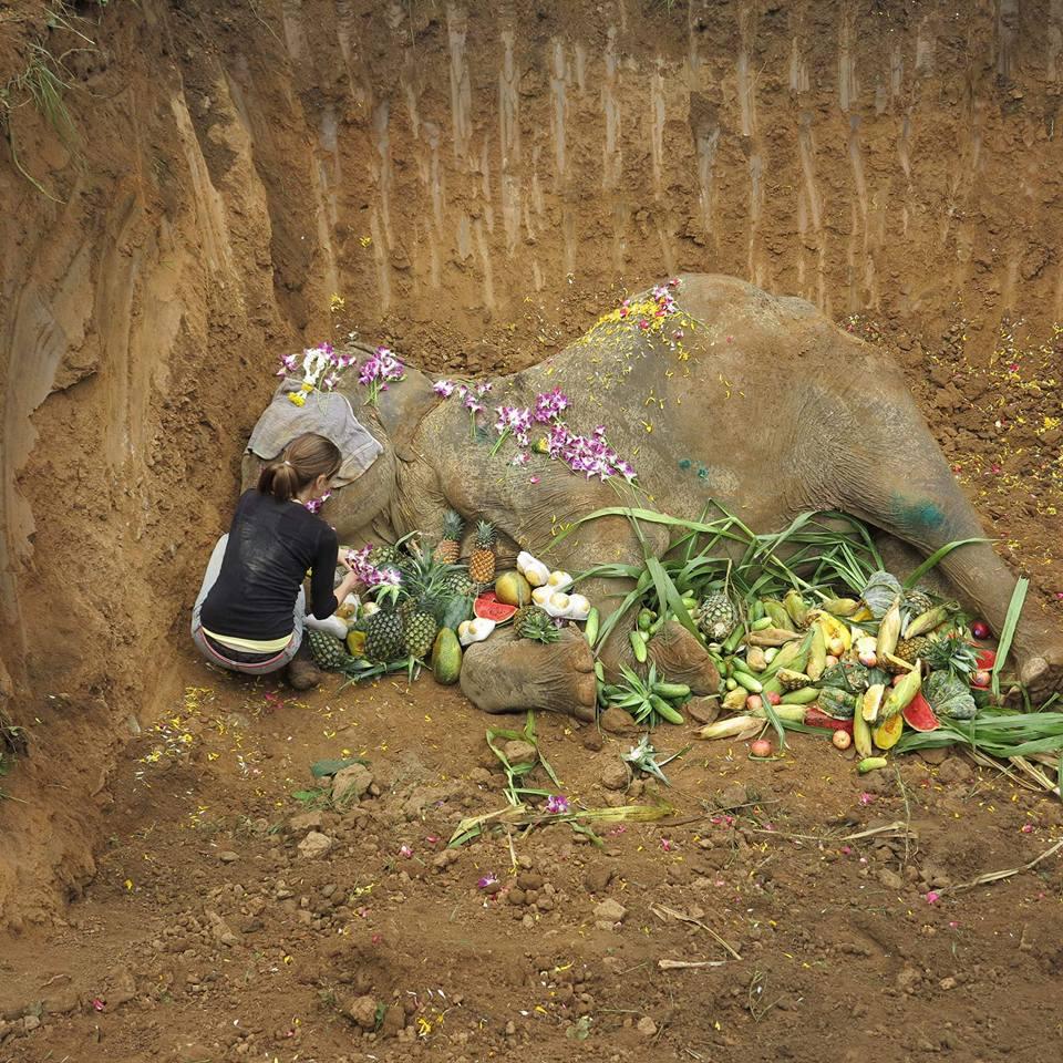 Egy hónappal megmentése után elhunyt a halálra dolgoztatott, öreg elefánt