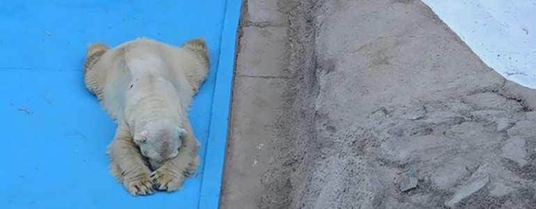 22 évnyi rabság után elhunyt a világ legszomorúbb jegesmedvéje