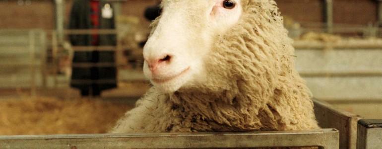 A klónbirkák is élhetnek hosszú, egészséges életet