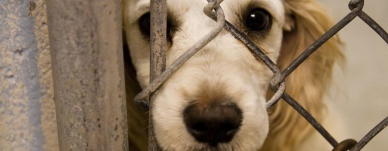 Rendezettebb körülményeket tapasztalt a NÉBIH a sárospataki kutyaotthonban