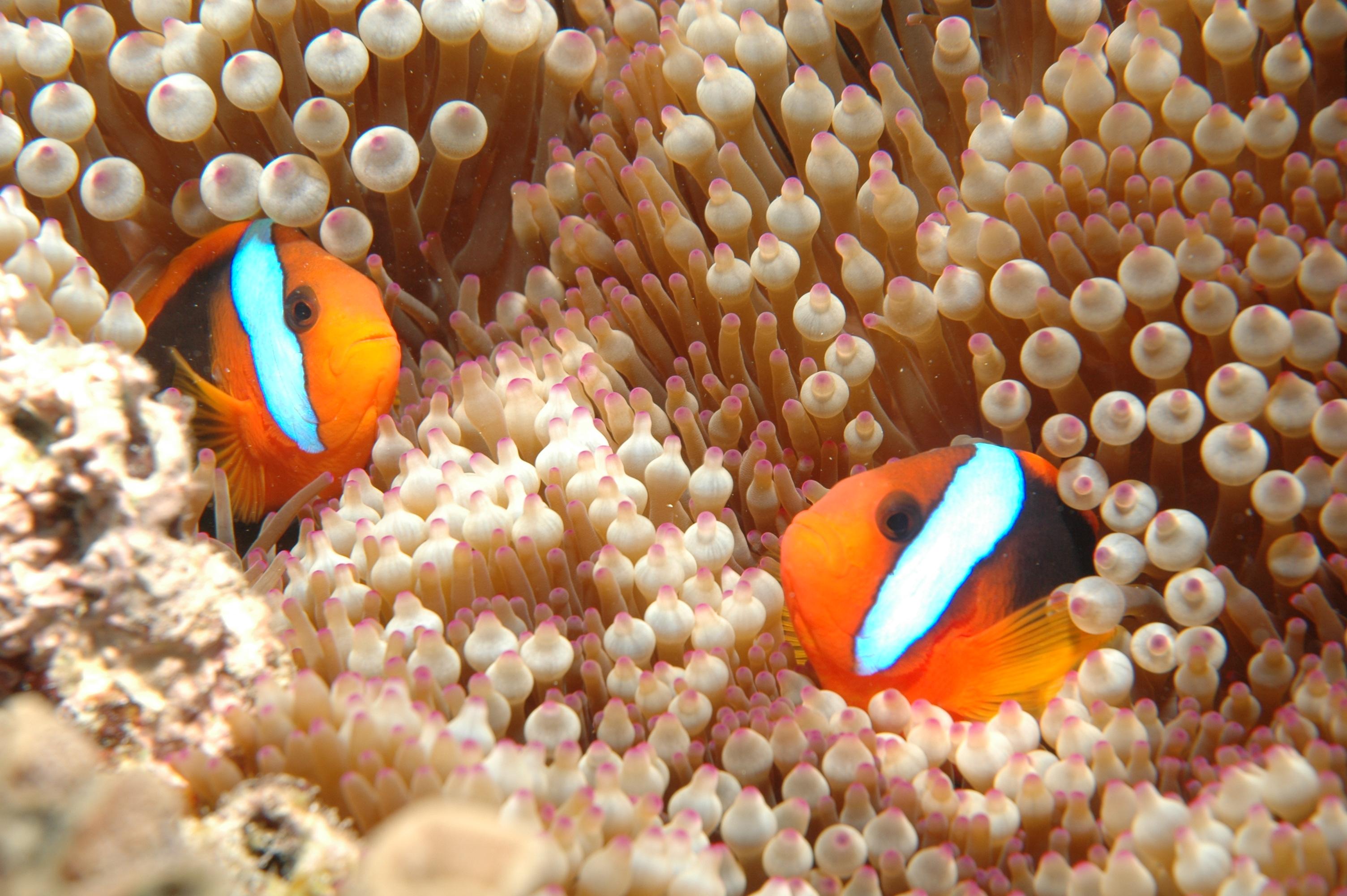 Cápavadászati jog vásárlással védi a Nagy-korallzátonyt a WWF