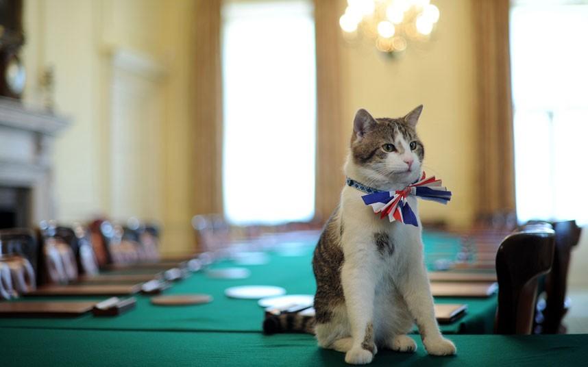 Ismerd meg Larry-t a miniszterelnökségi főegerész cicát